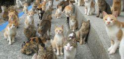 Australia: un robot cat-killer sterminatore di randagi