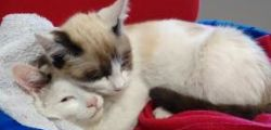 Amore fraterno felino tra due sorelle