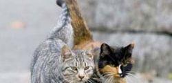 Un ex deposito diventa colonia felina