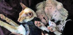 Stati Uniti: Gatto malato adotta cagnetta malata