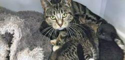 Nuova Zelanda: La gatta che ritrova i suoi cuccioli