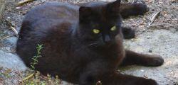 Quando il gatto fa pipì ovunque in casa, consigli dell'esperto